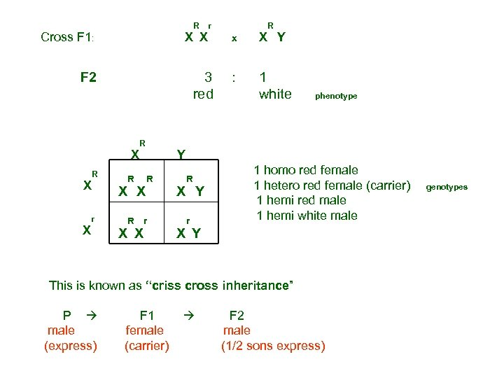 R Cross F 1: F 2 X X r X x X R Y