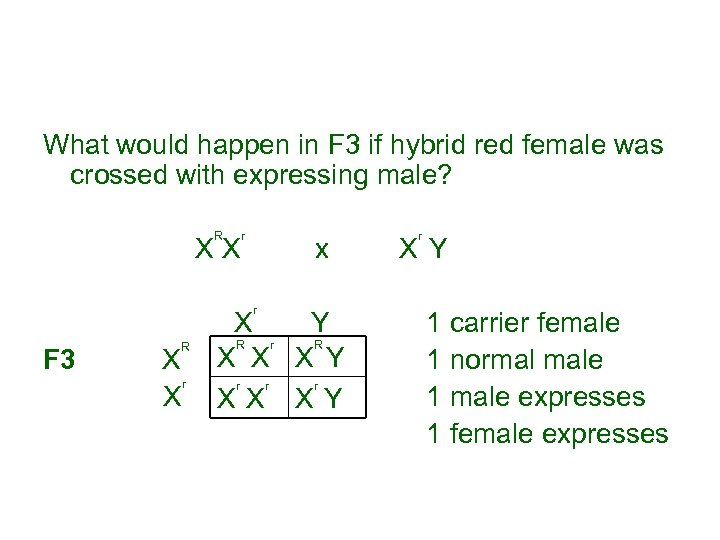 What would happen in F 3 if hybrid red female was crossed with expressing