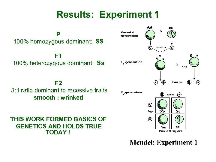 Results: Experiment 1 P 100% homozygous dominant: SS F 1 100% heterozygous dominant: Ss