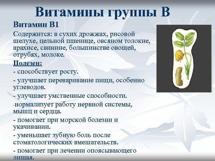 Витамины группы В Витамин В 1 Содержится: в сухих дрожжах, рисовой шелухе, цельной пшенице,