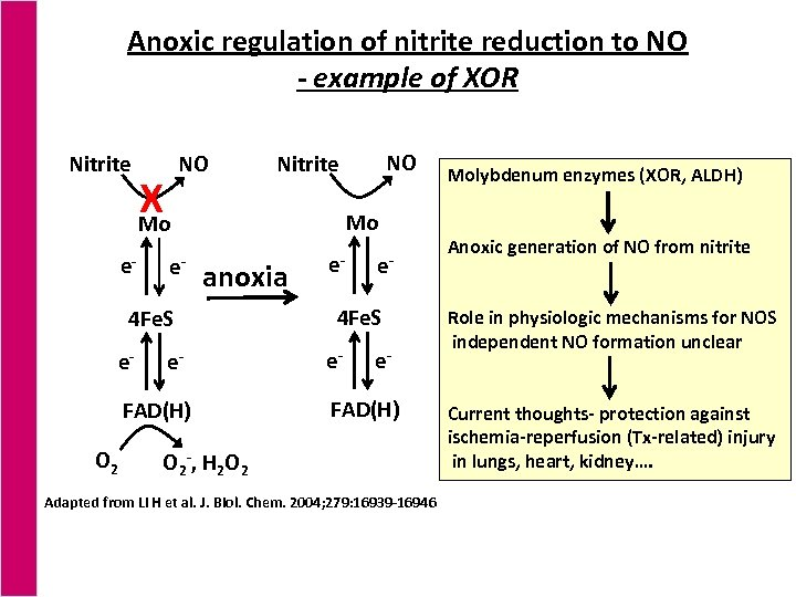 Anoxic regulation of nitrite reduction to NO - example of XOR Nitrite e- X