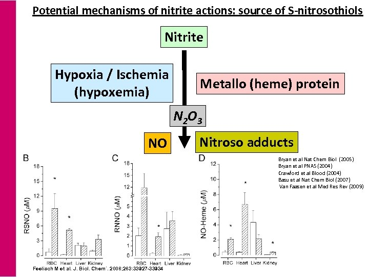 Potential mechanisms of nitrite actions: source of S-nitrosothiols Nitrite Hypoxia / Ischemia (hypoxemia) Metallo