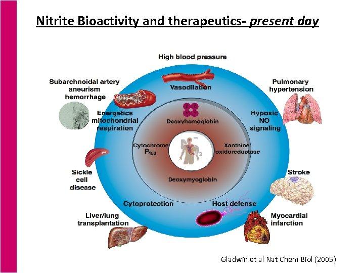 Nitrite Bioactivity and therapeutics- present day Gladwin et al Nat Chem Biol (2005)