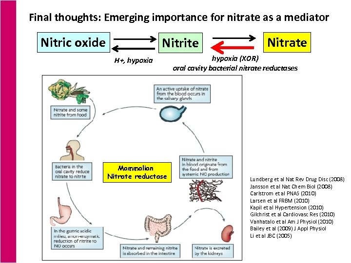 Final thoughts: Emerging importance for nitrate as a mediator Nitric oxide Nitrite H+, hypoxia
