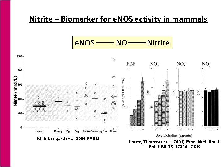 Nitrite – Biomarker for e. NOS activity in mammals e. NOS Kleinbongard et al