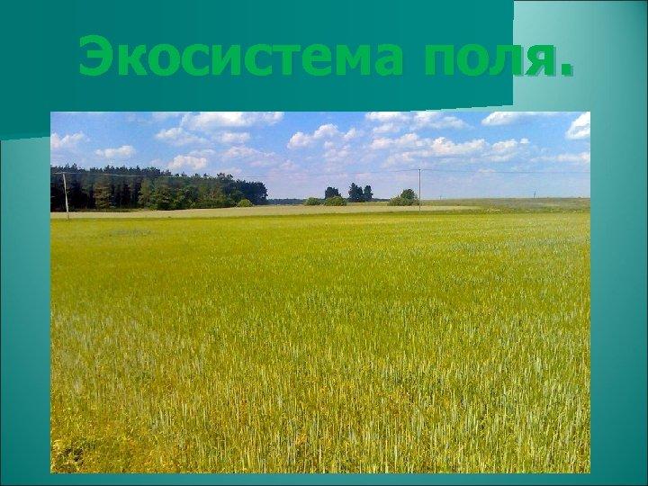 Экосистема поля.