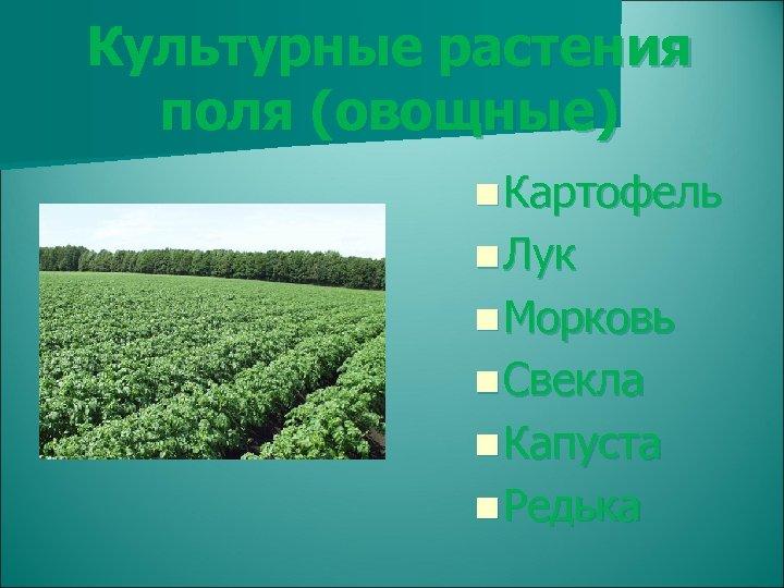 Культурные растения поля (овощные) n Картофель n Лук n Морковь n Свекла n Капуста