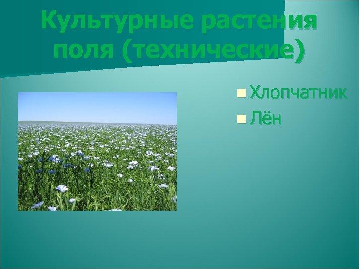 Культурные растения поля (технические) n Хлопчатник n Лён