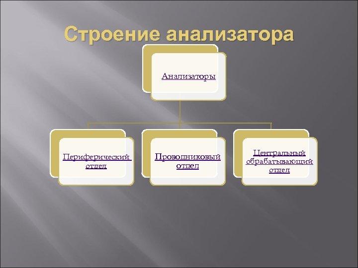 Строение анализатора Анализаторы Периферический отдел Проводниковый отдел Центральный обрабатывающий отдел