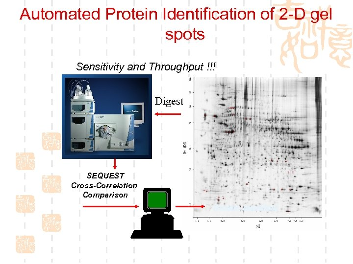 Automated Protein Identification of 2 -D gel spots Sensitivity and Throughput !!! ? Digest