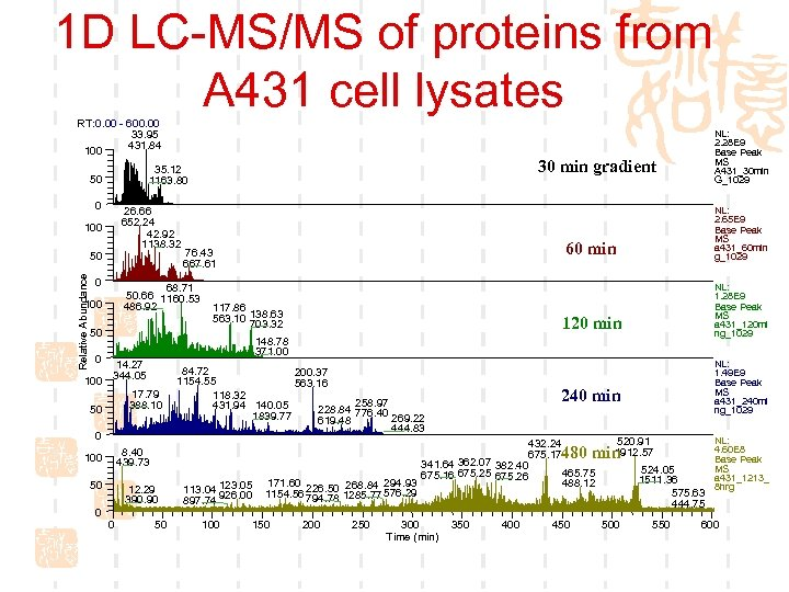 1 D LC-MS/MS of proteins from A 431 cell lysates RT: 0. 00 -