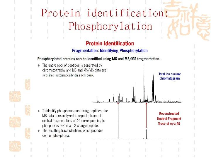 Protein identification: Phosphorylation