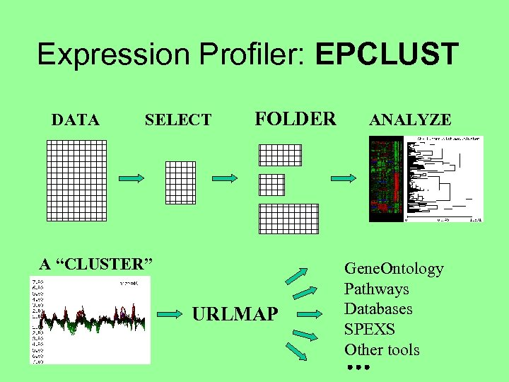 "Expression Profiler: EPCLUST DATA SELECT FOLDER A ""CLUSTER"" URLMAP ANALYZE Gene. Ontology Pathways Databases"