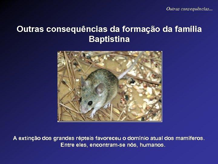 Outras consequências. . . Outras consequências da formação da família Baptistina A extinção dos