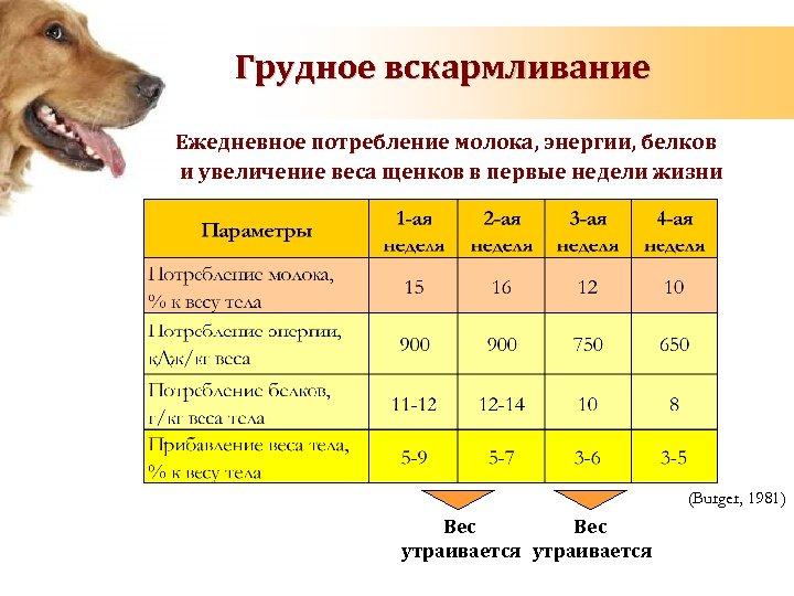 Грудное вскармливание Ежедневное потребление молока, энергии, белков и увеличение веса щенков в первые недели