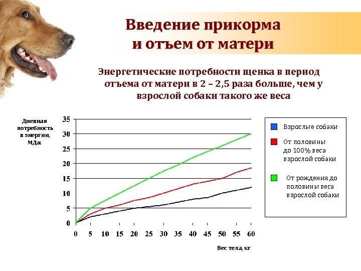 Введение прикорма и отъем от матери Энергетические потребности щенка в период отъема от матери