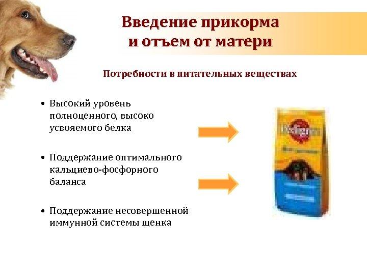 Введение прикорма и отъем от матери Потребности в питательных веществах • Высокий уровень полноценного,