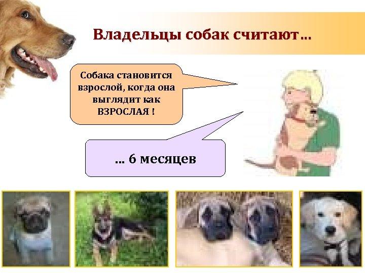 Владельцы собак считают… Собака становится взрослой, когда она выглядит как ВЗРОСЛАЯ ! … 6