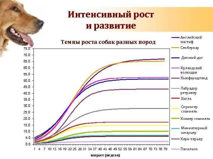Интенсивный рост и развитие вес (кг) Темпы роста собак разных пород 75. 0 70.