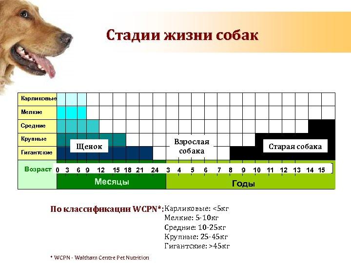 Стадии жизни собак Карликовые Toy Мелкие Small Средние Medium Крупные Large Гигантские Giant Age