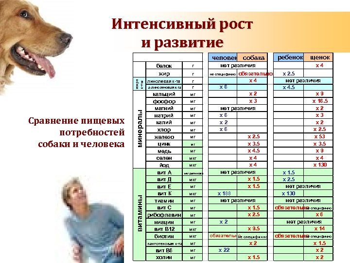 Интенсивный рост и развитие человек собака нет различия минералы витамины Сравнение пищевых потребностей собаки