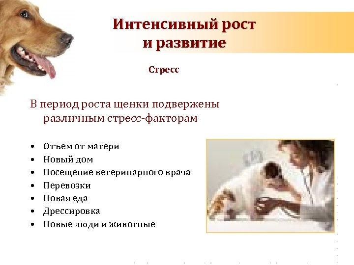 Интенсивный рост и развитие Стресс В период роста щенки подвержены различным стресс-факторам • •