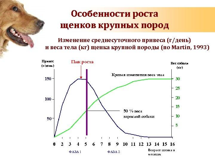 Особенности роста щенков крупных пород Изменение среднесуточного привеса (г/день) и веса тела (кг) щенка