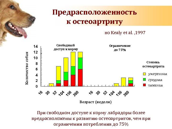 Предрасположенность к остеоартриту по Kealy et al. , 1997 Свободный доступ к корму 12