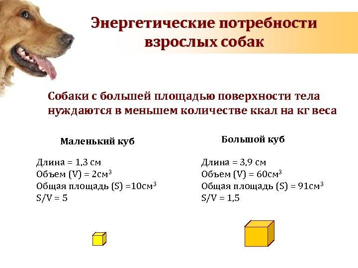 Энергетические потребности взрослых собак Собаки с большей площадью поверхности тела нуждаются в меньшем количестве