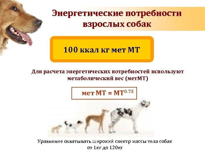 Энергетические потребности взрослых собак 100 ккал кг мет МT Для расчета энергетических потребностей используют