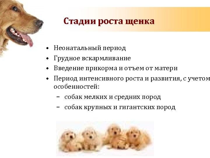 Стадии роста щенка • • Неонатальный период Грудное вскармливание Введение прикорма и отъем от