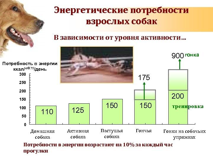 Энергетические потребности взрослых собак В зависимости от уровня активности… 900 гонка Потребность в энергии