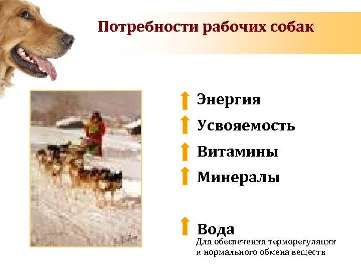 Потребности рабочих собак Энергия Усвояемость Витамины Минералы Вода Для обеспечения терморегуляции и нормального обмена