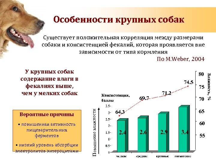 Особенности крупных собак Существует положительная корреляция между размерами собаки и консистенцией фекалий, которая проявляется
