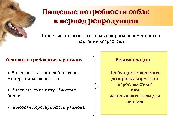 Energy requirements of dog Пищевые потребности собак during pregnancy and lactation в период репродукции