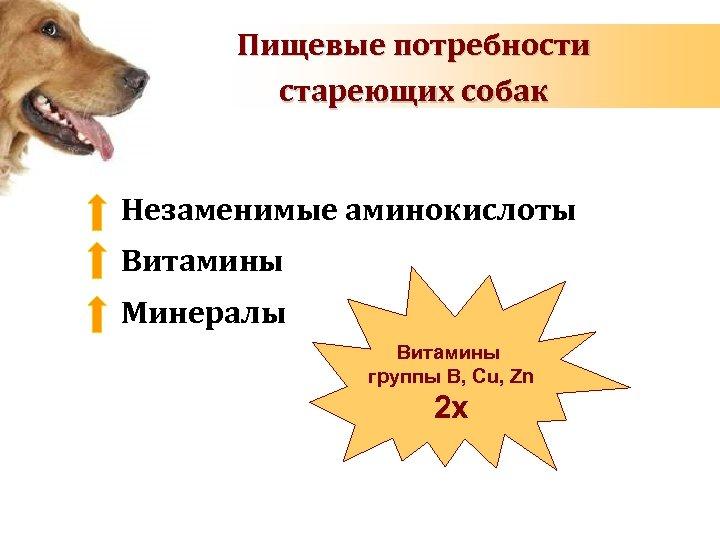 Пищевые потребности стареющих собак Незаменимые аминокислоты Витамины Минералы Витамины группы B, Cu, Zn 2