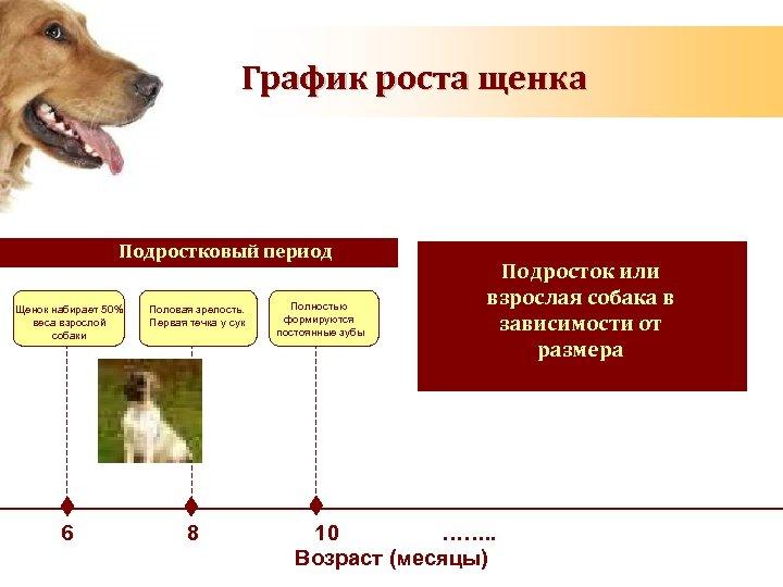 График роста щенка Подростковый период Щенок набирает 50% веса взрослой собаки 6 Половая зрелость.