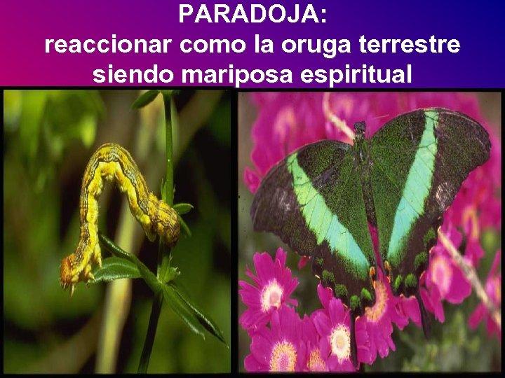 PARADOJA: reaccionar como la oruga terrestre siendo mariposa espiritual