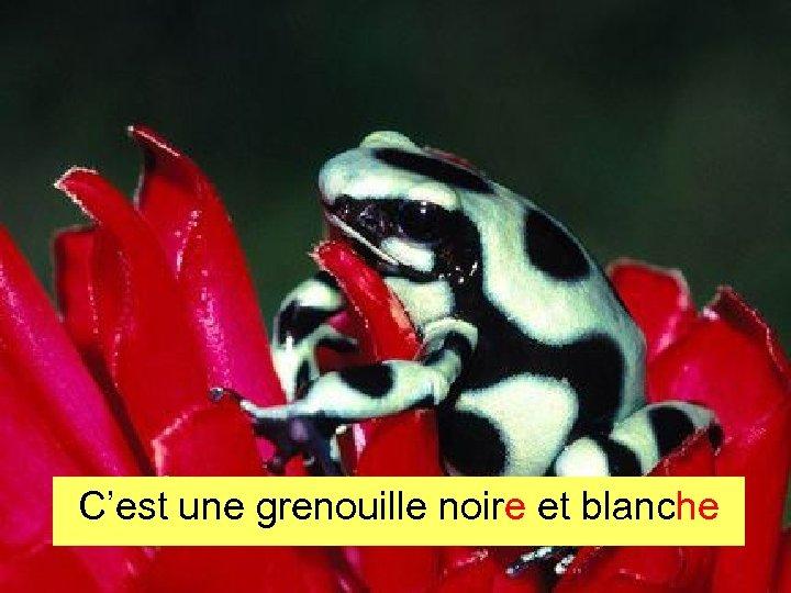C'est une grenouille noire et blanche