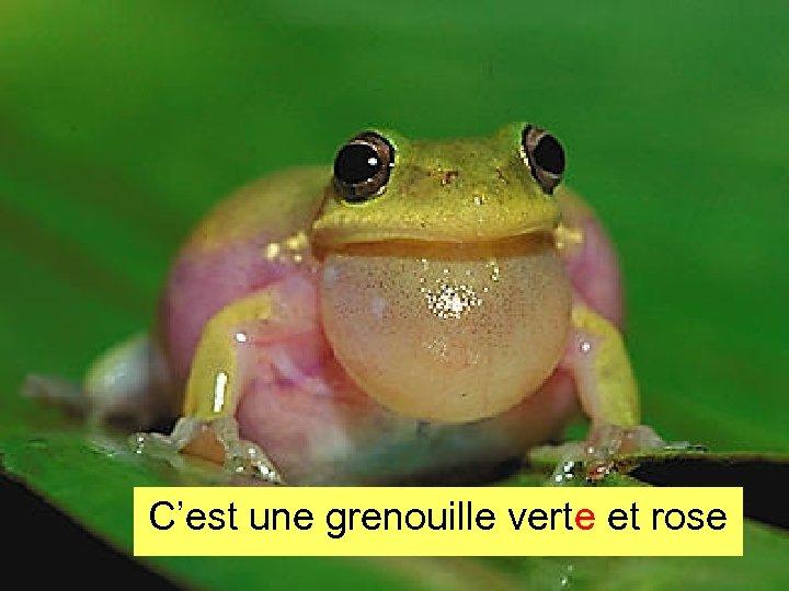 C'est une grenouille verte et rose