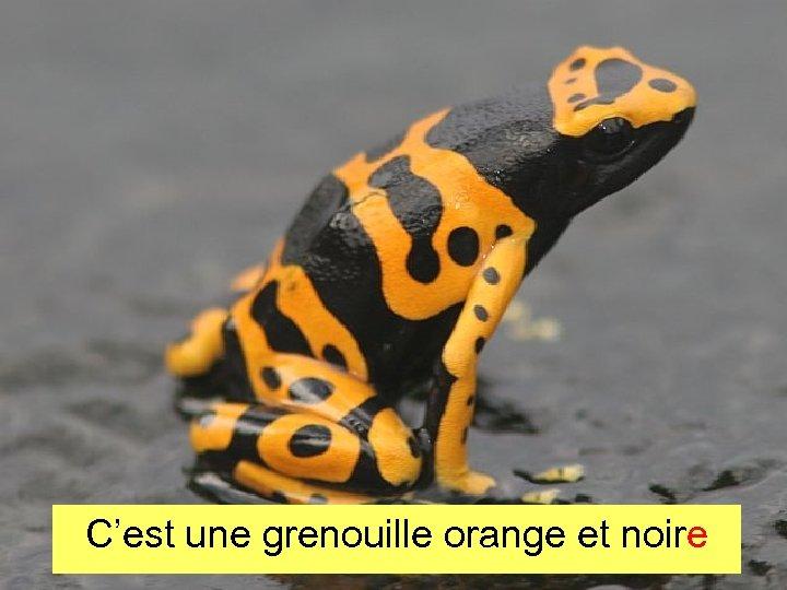C'est une grenouille orange et noire