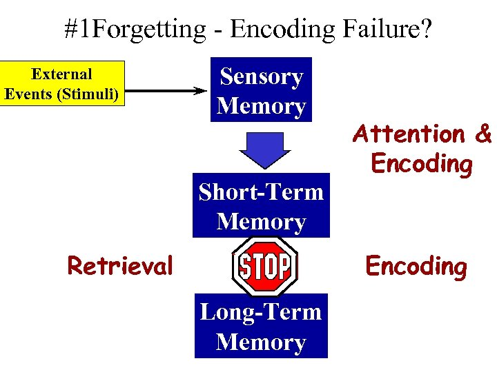 #1 Forgetting - Encoding Failure? External Events (Stimuli) Sensory Memory Short-Term Memory Retrieval Attention