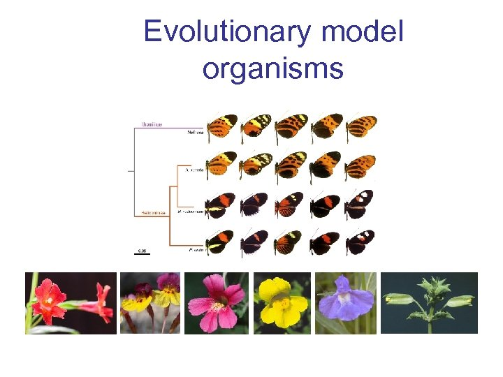 Evolutionary model organisms