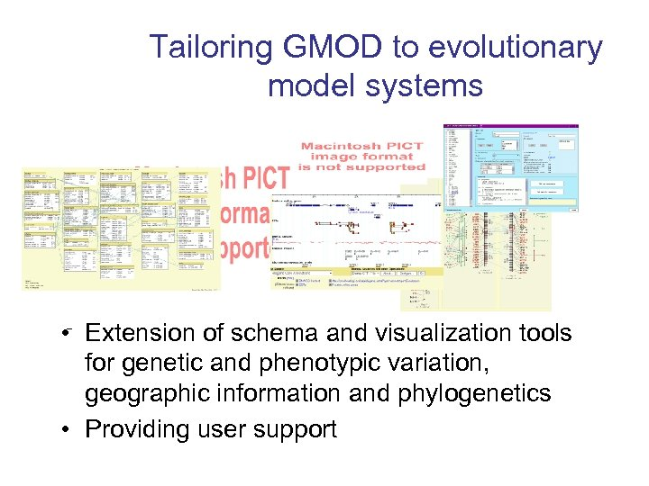 Tailoring GMOD to evolutionary model systems • – Extension of schema and visualization tools