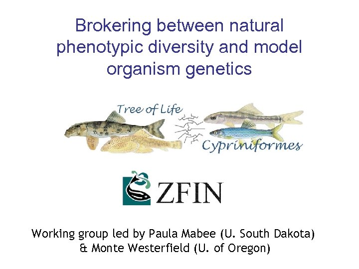 Brokering between natural phenotypic diversity and model organism genetics Working group led by Paula