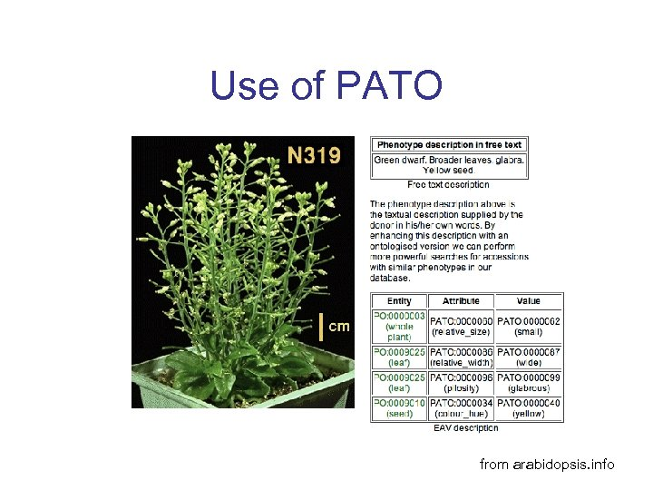 Use of PATO from arabidopsis. info