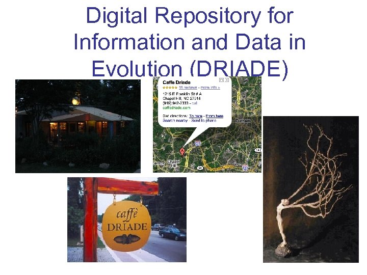 Digital Repository for Information and Data in Evolution (DRIADE)