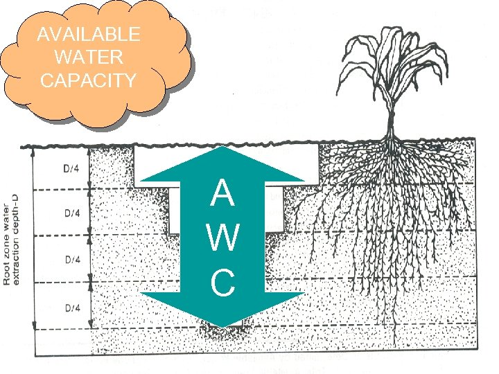 AVAILABLE WATER CAPACITY A W C