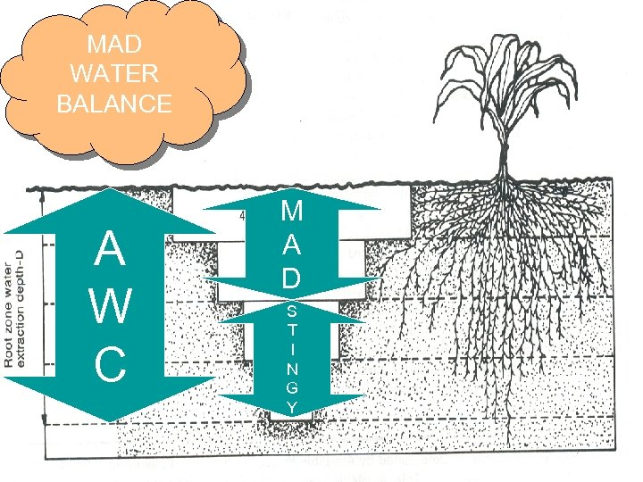 MAD WATER BALANCE A W C M A D S T I N G