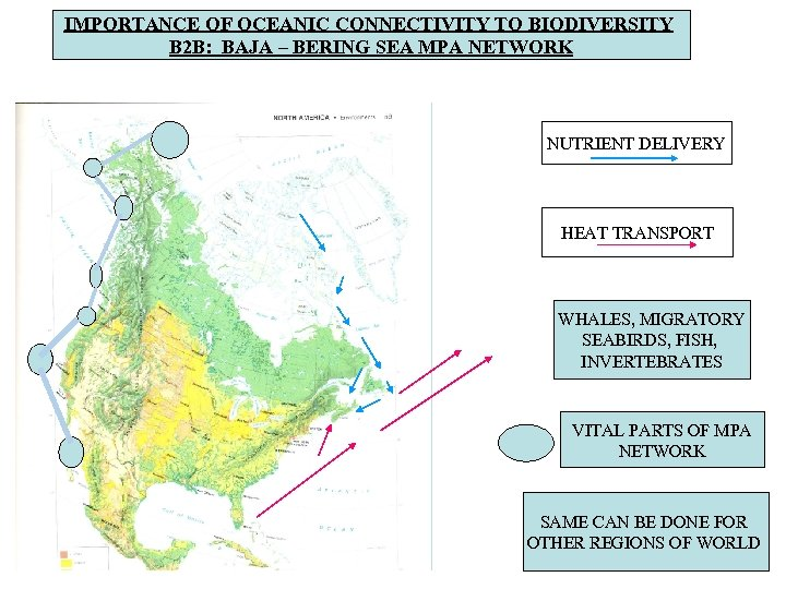 IMPORTANCE OF OCEANIC CONNECTIVITY TO BIODIVERSITY B 2 B: BAJA – BERING SEA MPA